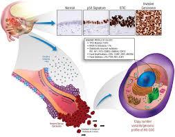 Citokini i funkcija jajnika